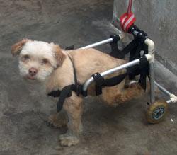 UPA: Einer der vielen Hunde, die gerettet wurden und nun auf ein neues Heim warten