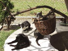 Tierschutzprojekt Monika Brukner - Katzenhaus im Tierheim.