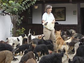 Tierschutzprojekt Monika Brukner - Kaum macht Monika Brukner einen Schritt in den Hof, ist sie umringt von ihren Schützlingen.