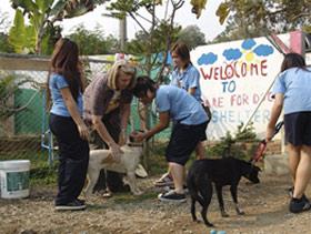 Schüler im Einsatz im Tierheim
