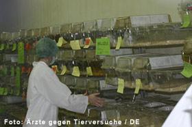 Übliche Mäusehaltung in Plastikkästen, die wie in einer Lagerhalle in Regalen übereinanderhängen