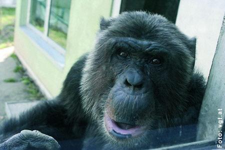 Hiasl: Aus dem Dschungel in Westafrika entführt und illegal nach Österreich gebracht