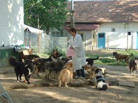 Tierhilfe Hoffnung e.V. - Fütterung unserer Hofhunde