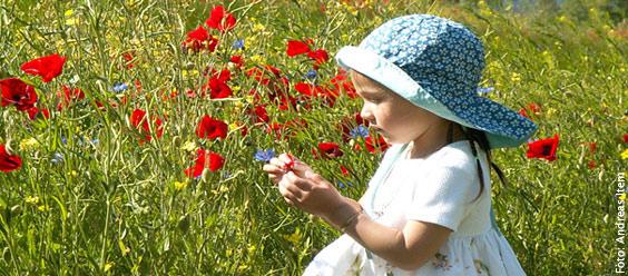 Nicht jedes Kind kann so unbekümmert im Blumenfeld spielen