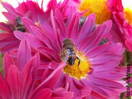 Ausreichender Sicherheitsabstand wird Bienenallergikern empfohlen