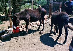 Auch einige Esel haben hier ein besseres Zuhause gefunden
