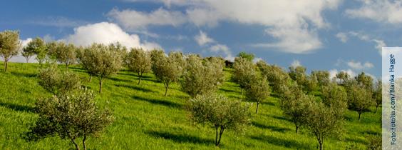 Olivenöl ist reich an ungsättigten Fettsäuren