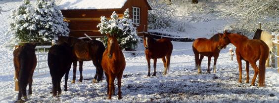 Bei Stinah haben diese Pferde ein neues Zuhause gefunden
