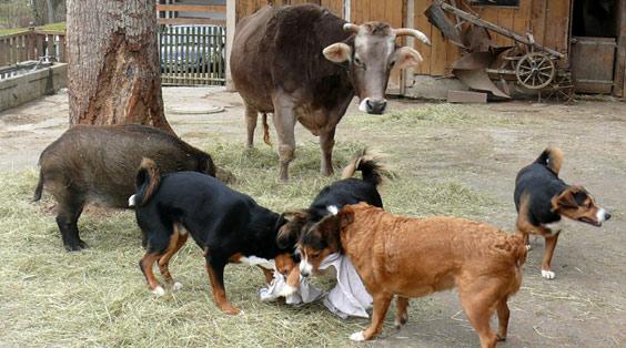 Stiftung Tierlignadenhof - Das kleine Paradies - Vergnügtes Spielen auf dem Hof