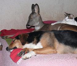 Ruhen und Kuscheln auf dem Bett