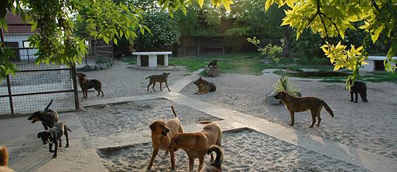 Tierschutzprojekt Djurdjevo - Innenhof des Tierheims