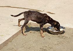 Tierschutzprojekt Djurdjevo: Ein Neuankömmling im Tierheim