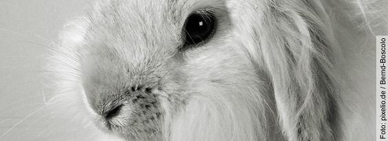 Internationaler Tag zur Abschaffung der Tierversuche -  Medizinische Fortschritte werden nicht dank, sondern trotz Tierversuchen  erreicht