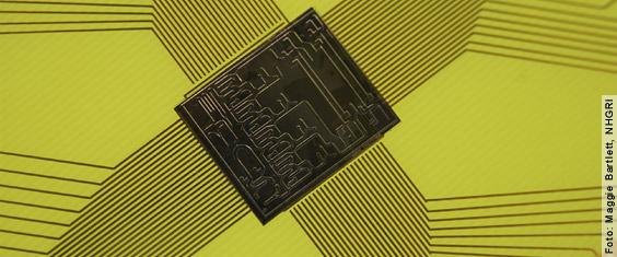 Biochips - Die In-vitro-Revolution. Biochips kommen einer Revolution bei der Wirkstofftestung gleich