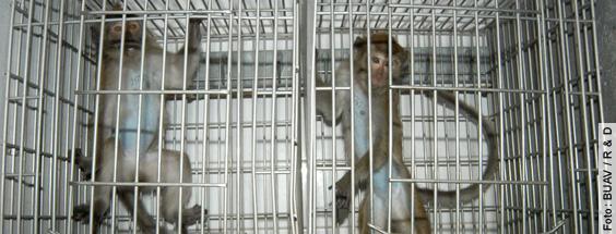 Methodische Defizite in der Forschung - Ist Affenforschung auf die menschliche Gesundheit übertragbar?